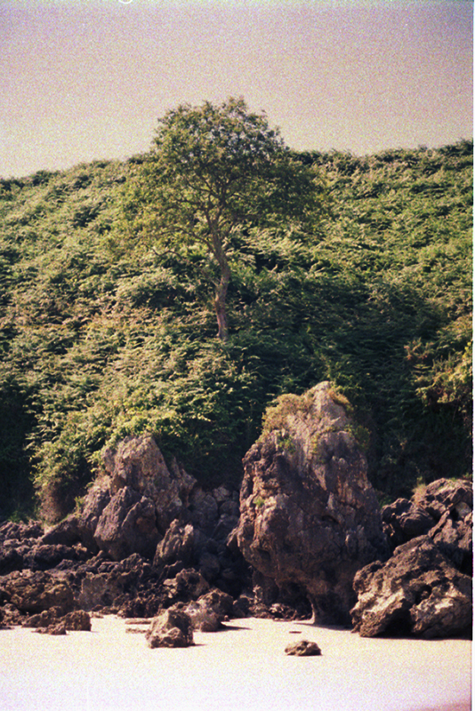 Trees and rocks in the coast of Asturias